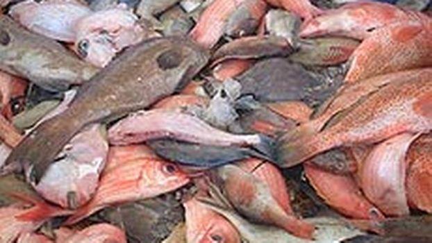 site de rencontres du poisson au Royaume-Uni Combien de temps devez-vous attendre pour brancher après une rupture