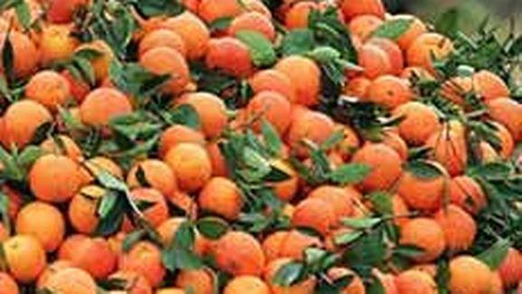 7d20fa5c9568b0 Pesticides dans les agrumes non traités: halte à la fraude ...