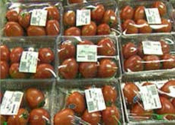 Tomates d'Espagne : le bagne sous cellophane [DR]