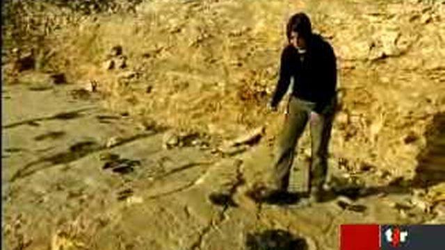 JU: les paléontologues présentent le plus beau site d'empreintes de dinosaures en Ajoie
