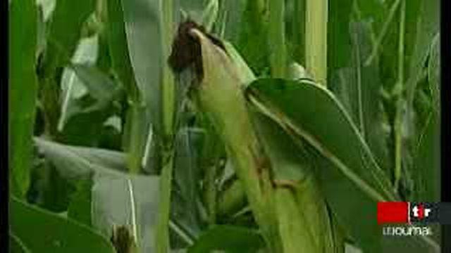 Les OGM soulèvent de plus en plus de réticences
