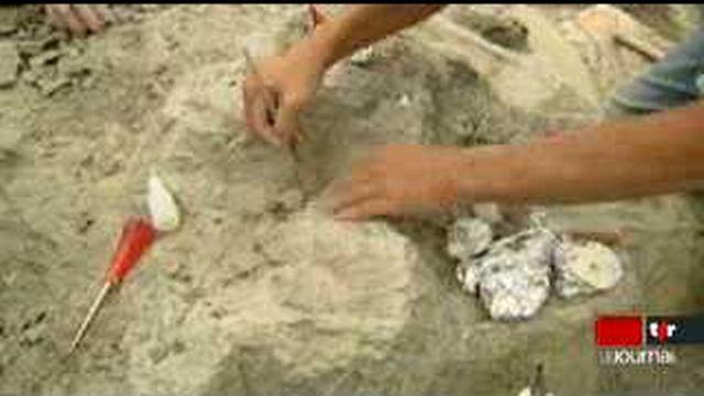 Le site paléontologique de Frick (AG) regorge de squelettes de dinosaures