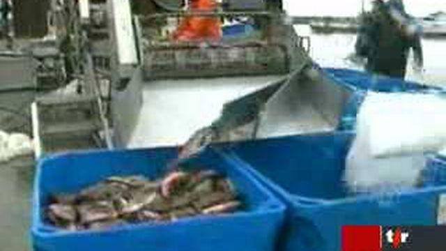 La pêche industrielle pourrait condamner la plupart des espèces de poissons d'ici 50 ans