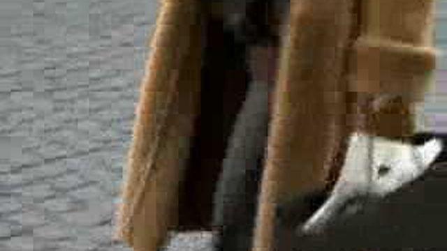 Chine: la maltraitance d'animaux à fourrure soulève la polémique en Suisse