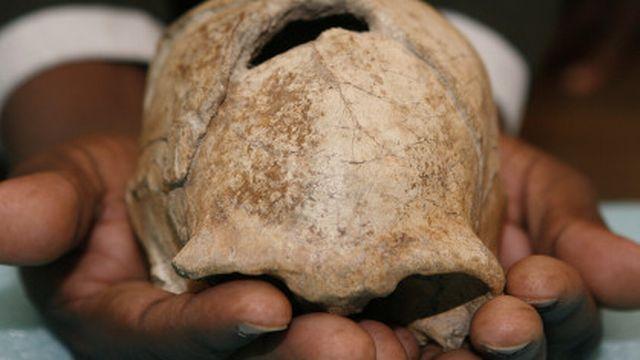 Il s'agit du 1er fossile d'Homo erectus féminin jamais découvert [Reuters]