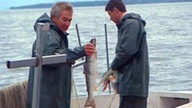 Entre 1950 et 2003, les prises de poissons ont chuté massivement