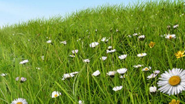 Suivez les conseils Martial Pot pour avoir un beau gazon fleuri. [© fotolia]