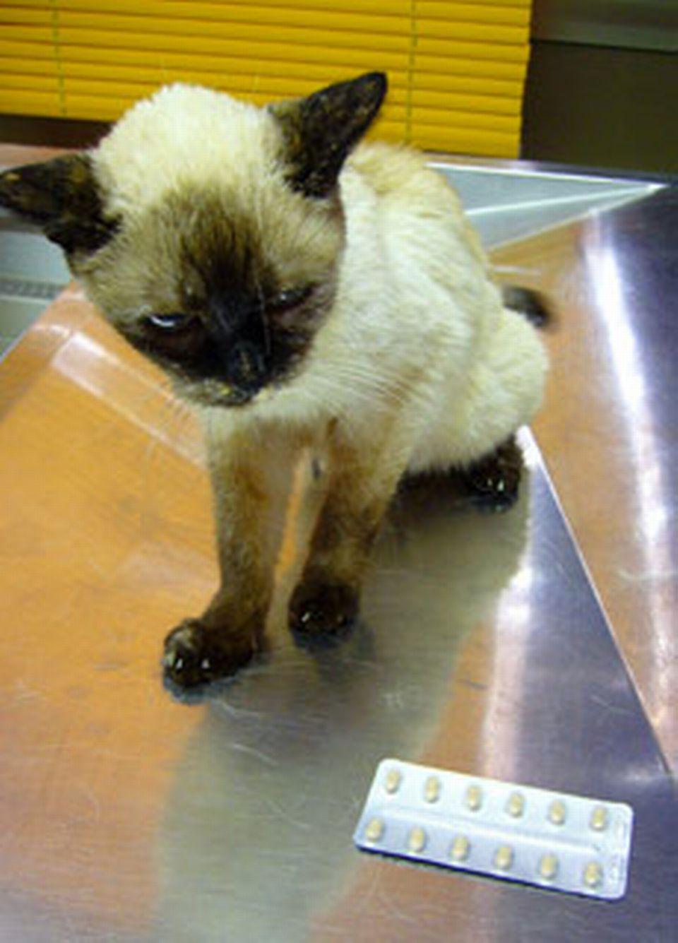 Soins aux ongles d 39 un vieux chat - A quel age couper les griffes d un chat ...