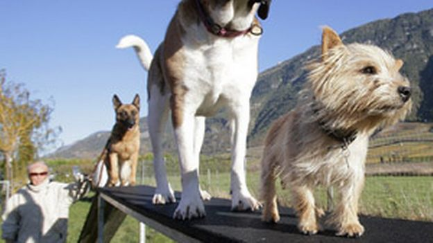 L'éducation d'un chien : que dit la loi? | 2 septembre