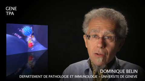 Le gène TPA par Dominique Belin
