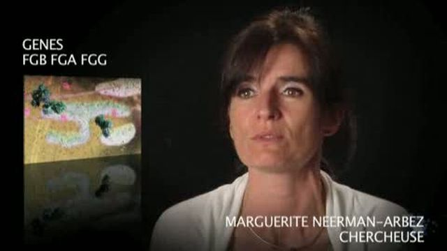 Les gènes FGB FGA FGG par Marguerite Neerman-Arbez