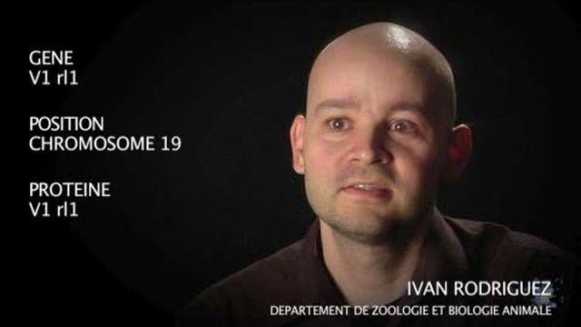 Le gène V1rl1 par Ivan Rodriguez