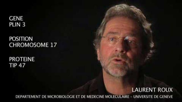 Le gène PLIN 3 par Laurent Roux