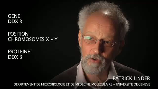 Le gène DDX 3 par Patrick Linder