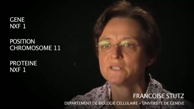 Le gène NXF 1 par Françoise Stutz