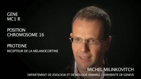 Le gène MC1 R par Michel Milinkovitch