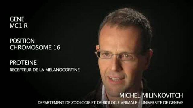 Le gène MC1 R par Michel Milinkovitch