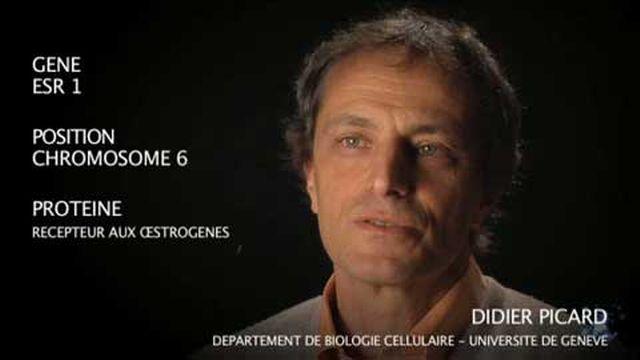 Le gène ESR 1 par Didier Picard