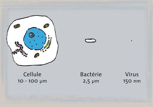 Bactéries et virus: des microbes de toutes tailles! [dr