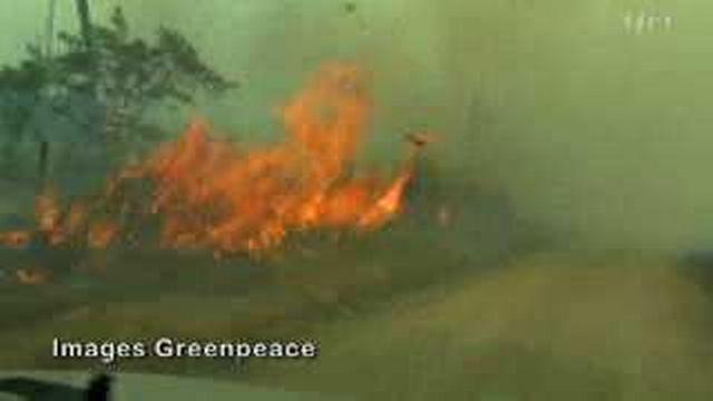 L'huile de palme : un désastre écologique