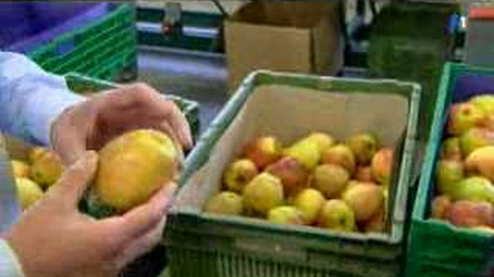 Pommes de discorde