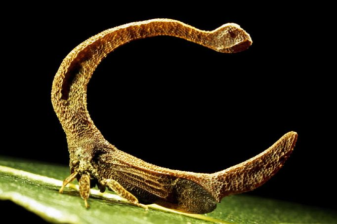 Insectes bien étranges   :  1890179