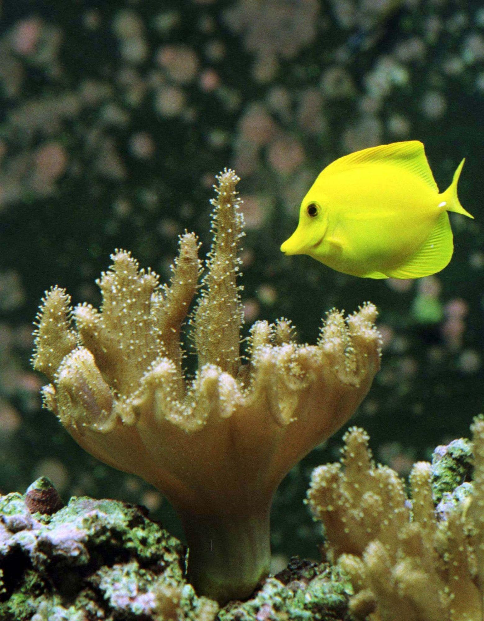 La grande barrière de corail a perdu la moitié de ses coraux en 27 ...