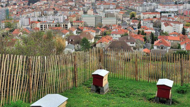 Dorénavant, les abeilles s'installent en ville. [bernard 63 - Fotolia]