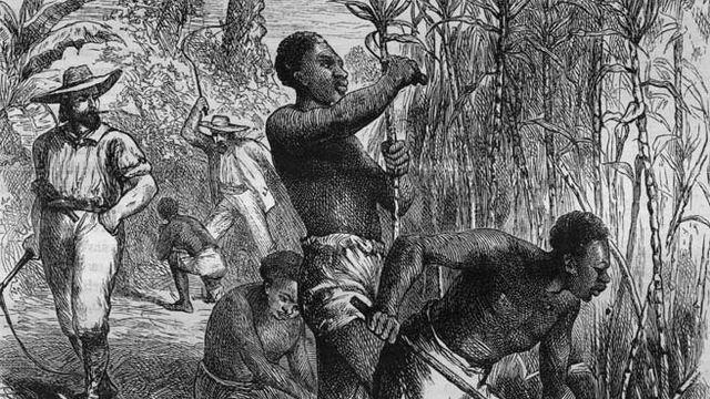 Au XVIIe siècle, les Français s'installent en Haïti pour exploiter la canne à sucre et le café