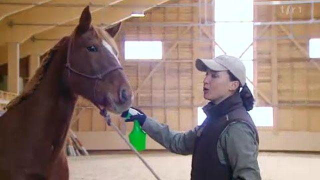 La peur chez l'animal: le cheval