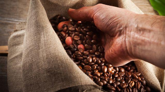 Le mode de production de la matière première est déterminant dans l'écobilan d'une tasse de café. chlorophylle fotolia [chlorophylle - Fotolia]