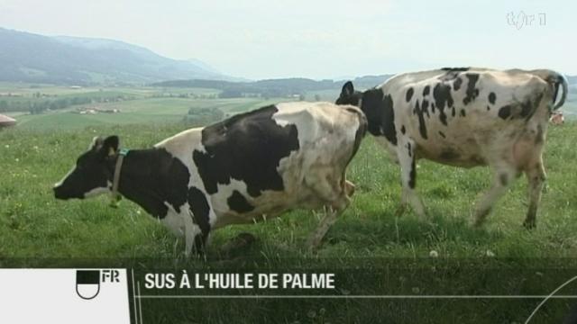 Des députés fribourgeois veulent bannir l'huile de palme, car elle nuirait à l'agriculture suisse