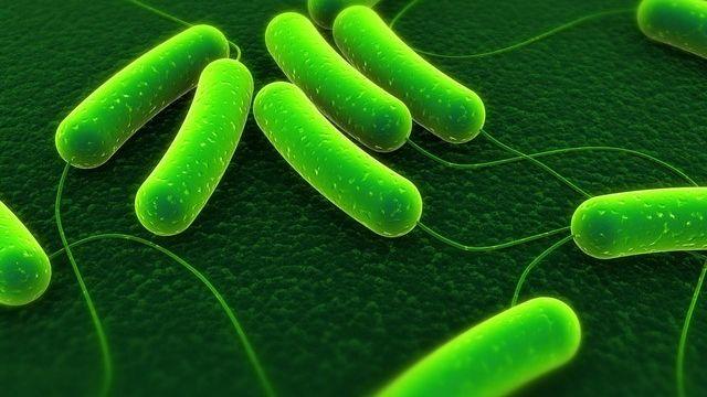 microbe... [Fotolia.com/Sebastian Kaulitzki]