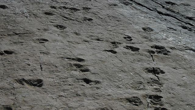 Vu d'ensemble des traces de dinosaures du versant suisse du col de la Terrasse au barrage d'Emosson. [Wikimedia]