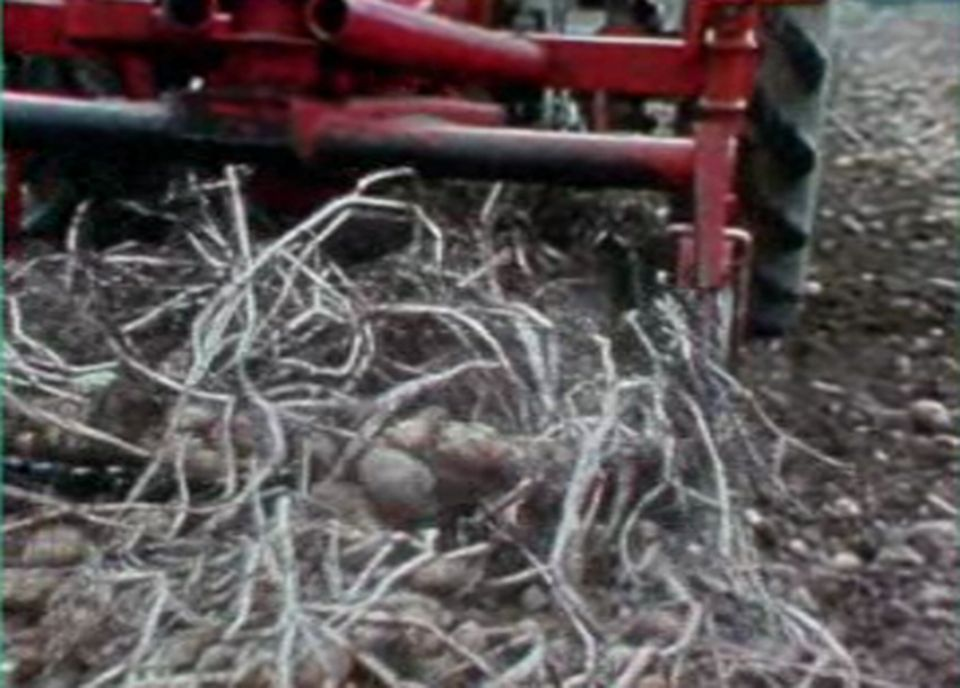 L'agriculture bio peine à s'imposer