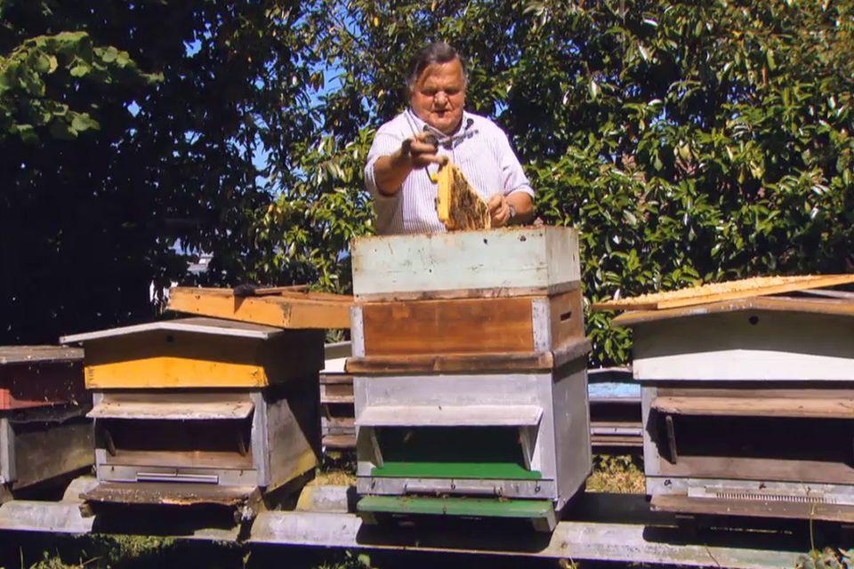 Les abeilles vivent en moyenne 40 jours.