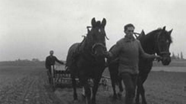 Au temps dernier des chevaux