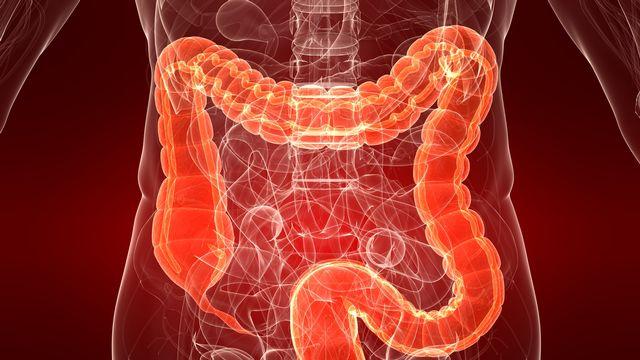 """Radiocéphale"" s'intéresse à la flore intestinale ou microbiote. [Sebastian Kaulitzki]"