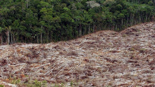 Dans certains Etats brésilien, la déforestation a tout de même été multipliée par deux en un an. [MARCELO SAYAO  - Keystone]