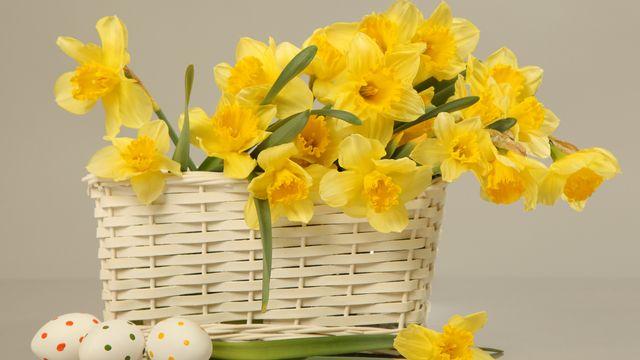 Un beau bouquet de jonquilles pour Pâques. [Foxy_A - Fotolia]
