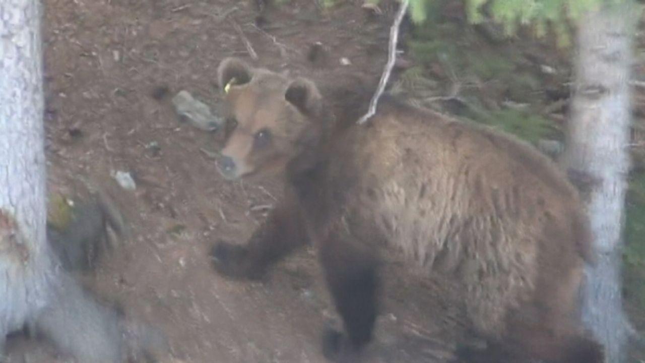 Séquences choisies - Les images de l'ours sauvage