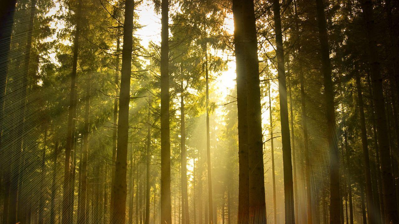 La forêt. [James Thew - Fotolia]