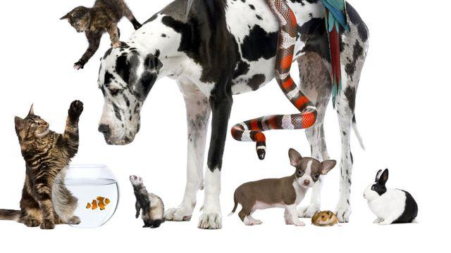 Les humains ont des devoirs envers leurs animaux. Eric Isselée Fotolia [Eric Isselée - Fotolia]