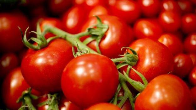 La disparition du goût de la tomate