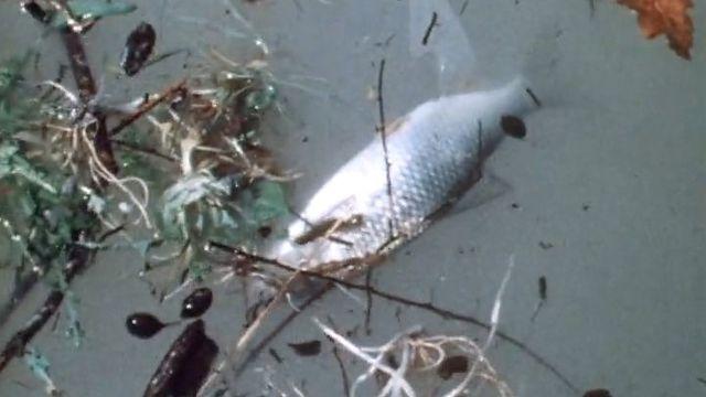 Eau polluée [TSR]
