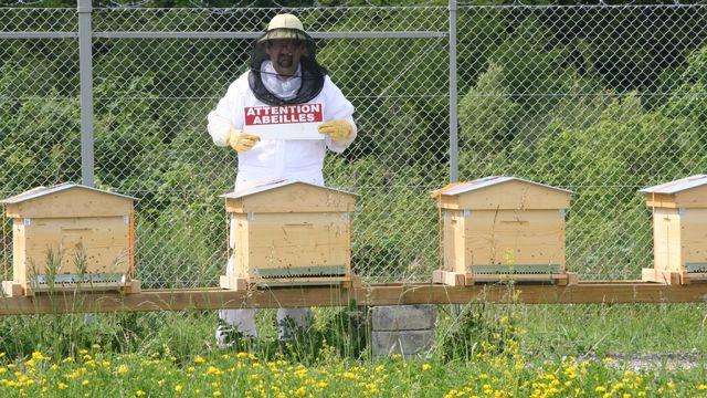Bertrand Stämpfli et les ruches de l'aéroport de Cointrin. [Genève Aéroport]