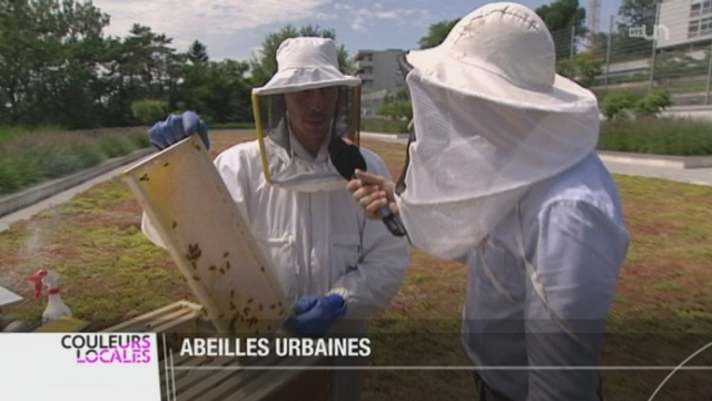 La mode des ruches et des abeilles en ville touche la Suisse romande