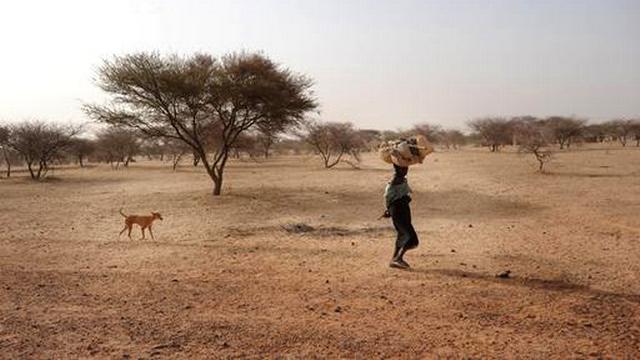 Crise alimentaire au Sahel, appel de MSF, juillet 2012. [MSF]