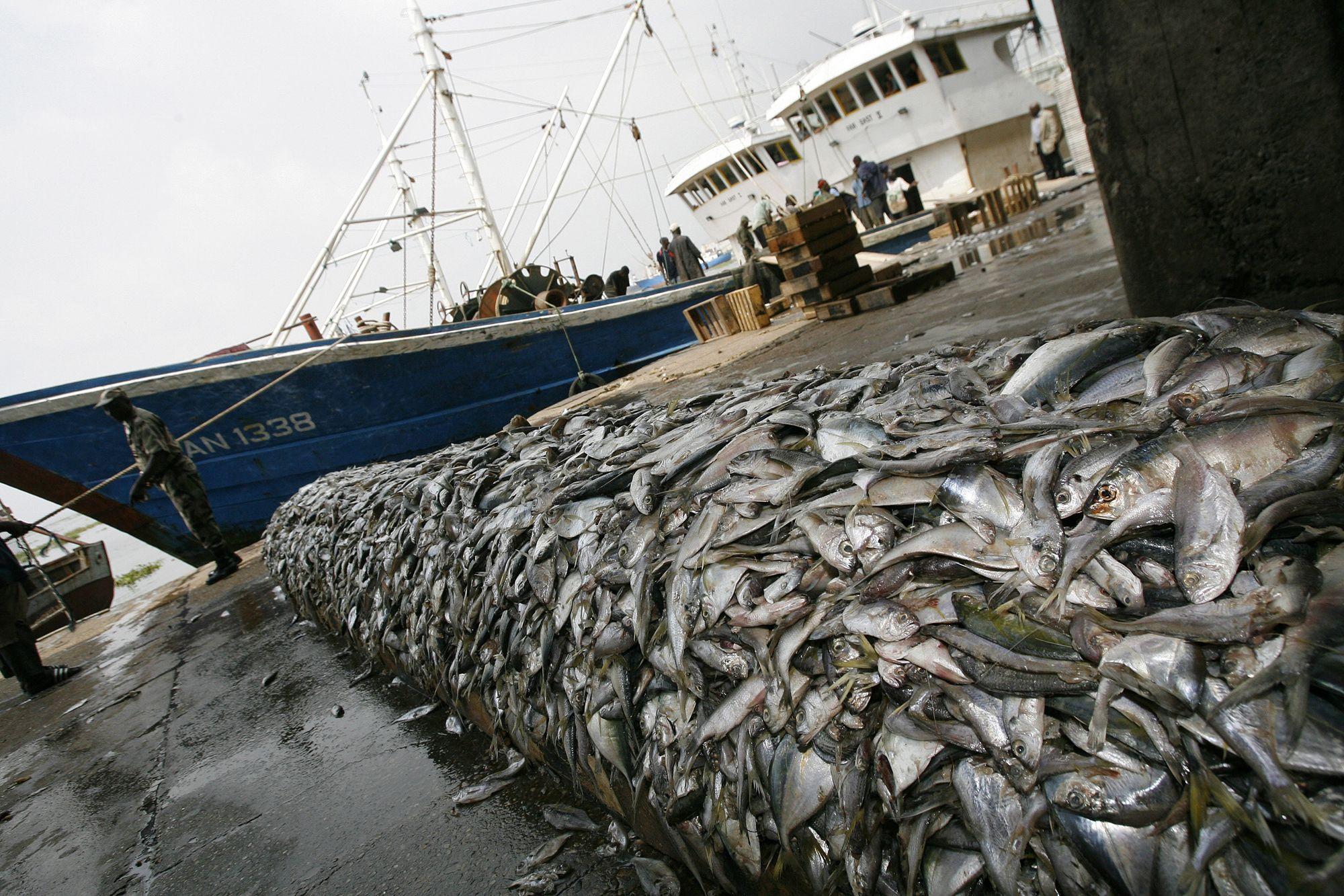 La pêche dhiver de vidéo en 2015