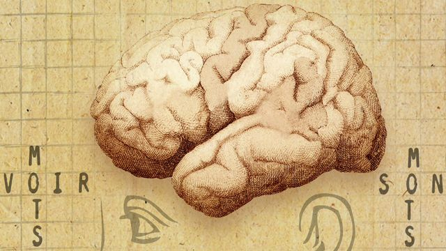 Le cerveau est le siège de notre langage. [RTS]